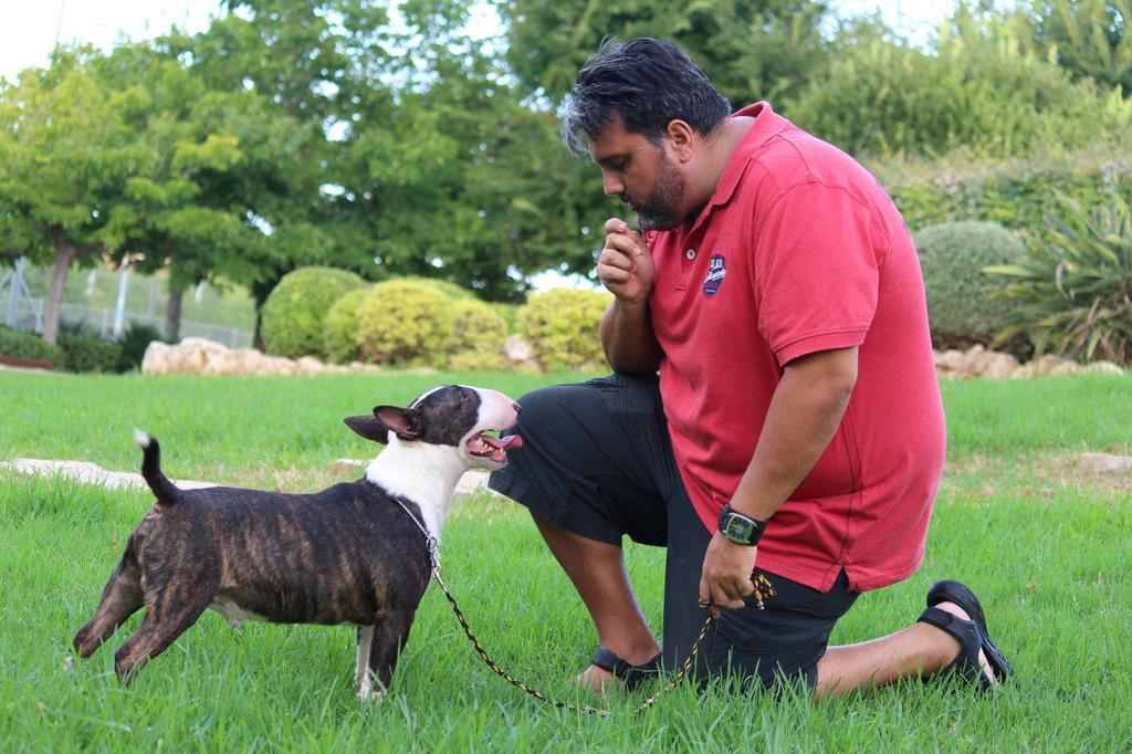 Gio-bull-terrier-miniatura (10)