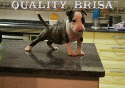 "Quality ""Brisa"""